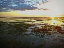 ibera marshlands argentina