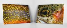 Fly Fish Prints