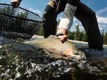 wild cutthroat trout