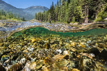Canadian Rocky Mountain trout stream