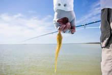 mayan riviera fly fishing