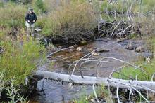 Headwater Trout stream
