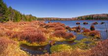 Black Moshannon Wetland