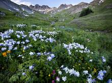 mountains wildflowers