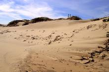 south padre island dunes | texas