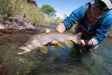 brown trout rio chimehuin