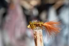 woolly bugger