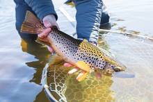 brown trout | copyright 2021 chad shmukler