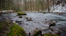 quiet forest trout stream