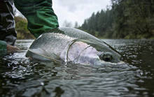 Washington Steelhead