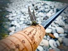 Green Drake Mayfly on fly rod