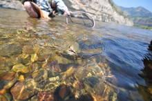 trout soft hackle