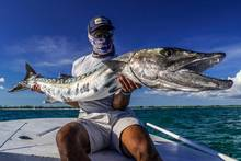 bahamas barracuda