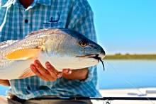 Redfish Sun Shine