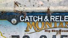 bug splattered montana license plate