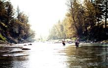 Lamar River YNP