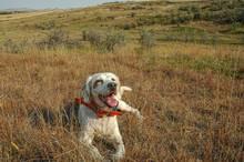 tina the dog