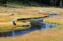 fly fishing on Nez Perce Creek in Yellowstone National Park