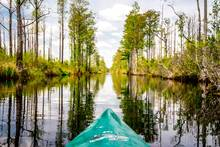 kayaking the Okefenokee Swamp