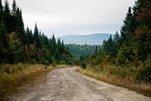 Road to Big Brook Bog