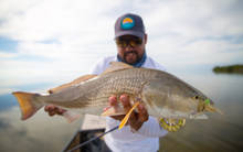florida everglades redfish