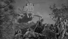 Brood II Cicada
