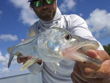 florida bay snook