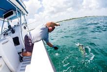fly fishing dorado mahi mahi