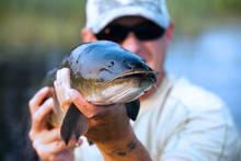 bowin - mudfish