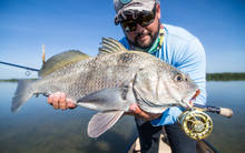 Everglades Black Drum