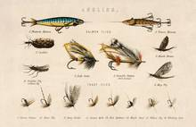 angling baits British Freshwater Fishes