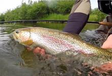 Bristol Bay Rainbow - Nushagak River