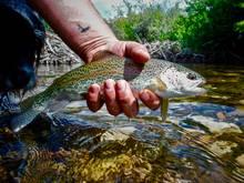 idaho high mountain trout