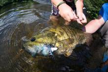 smallmouth bass fly fishing