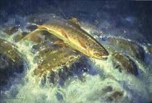 trout - artist jim morgan