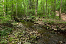 Pennsylvania Brook Trout Stream (photo: Chad Shmukler)