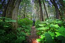 walking through tongass national forest