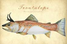 the search for elusive trout - troutalope