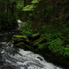 Tongass National Forest Stream