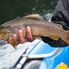 Patagonia - Rio Frey - Brown Trout