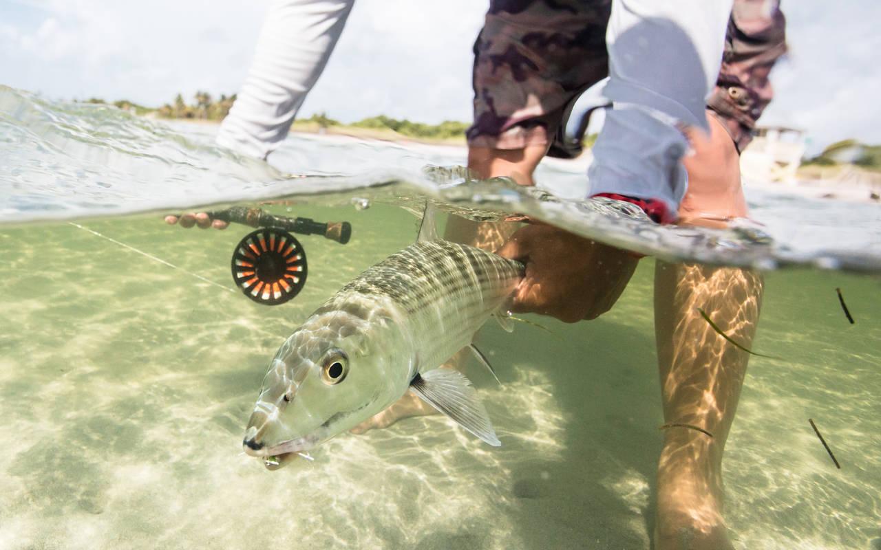 Redington Behemoth bonefishing