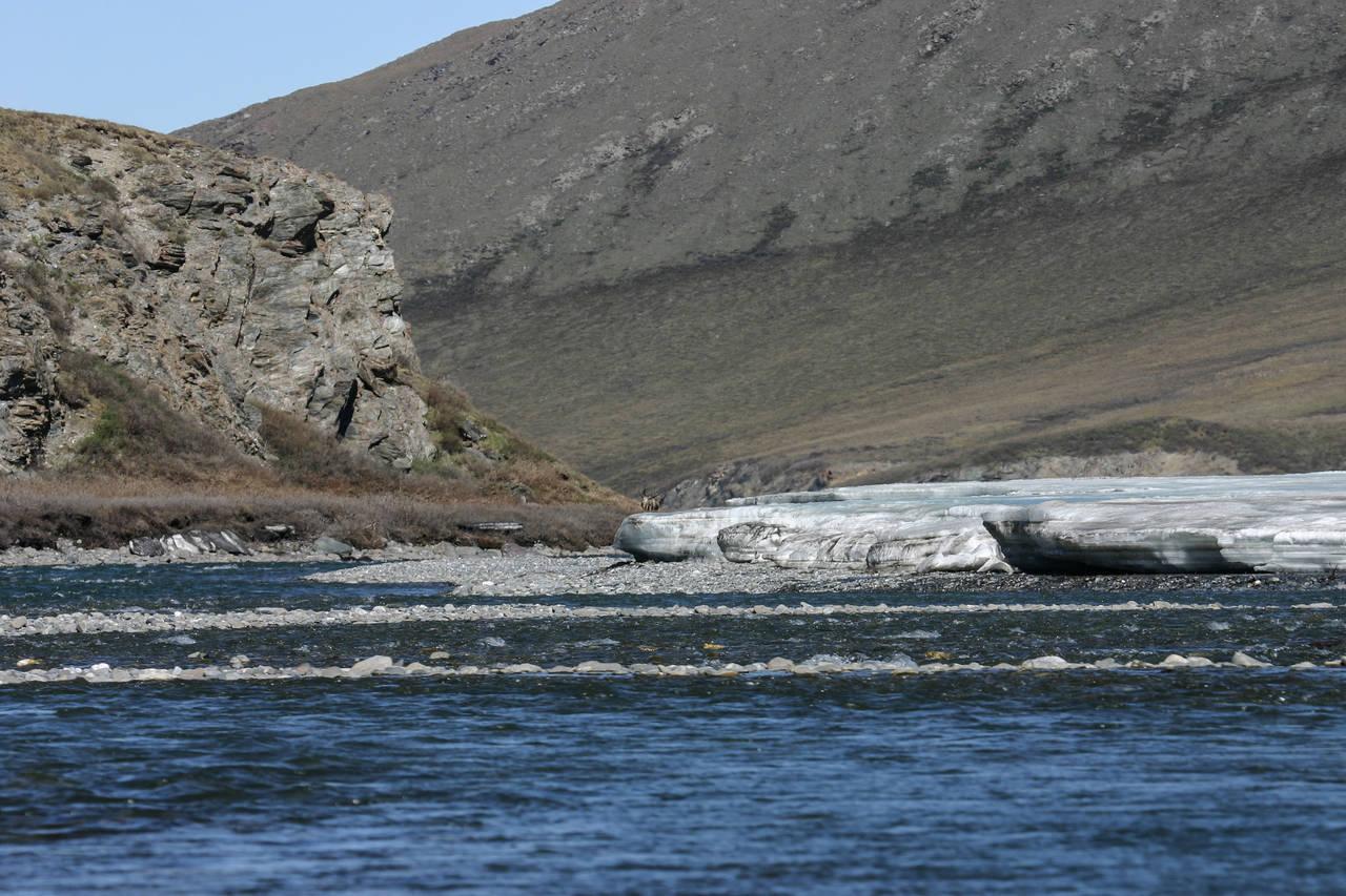 Kongakut River