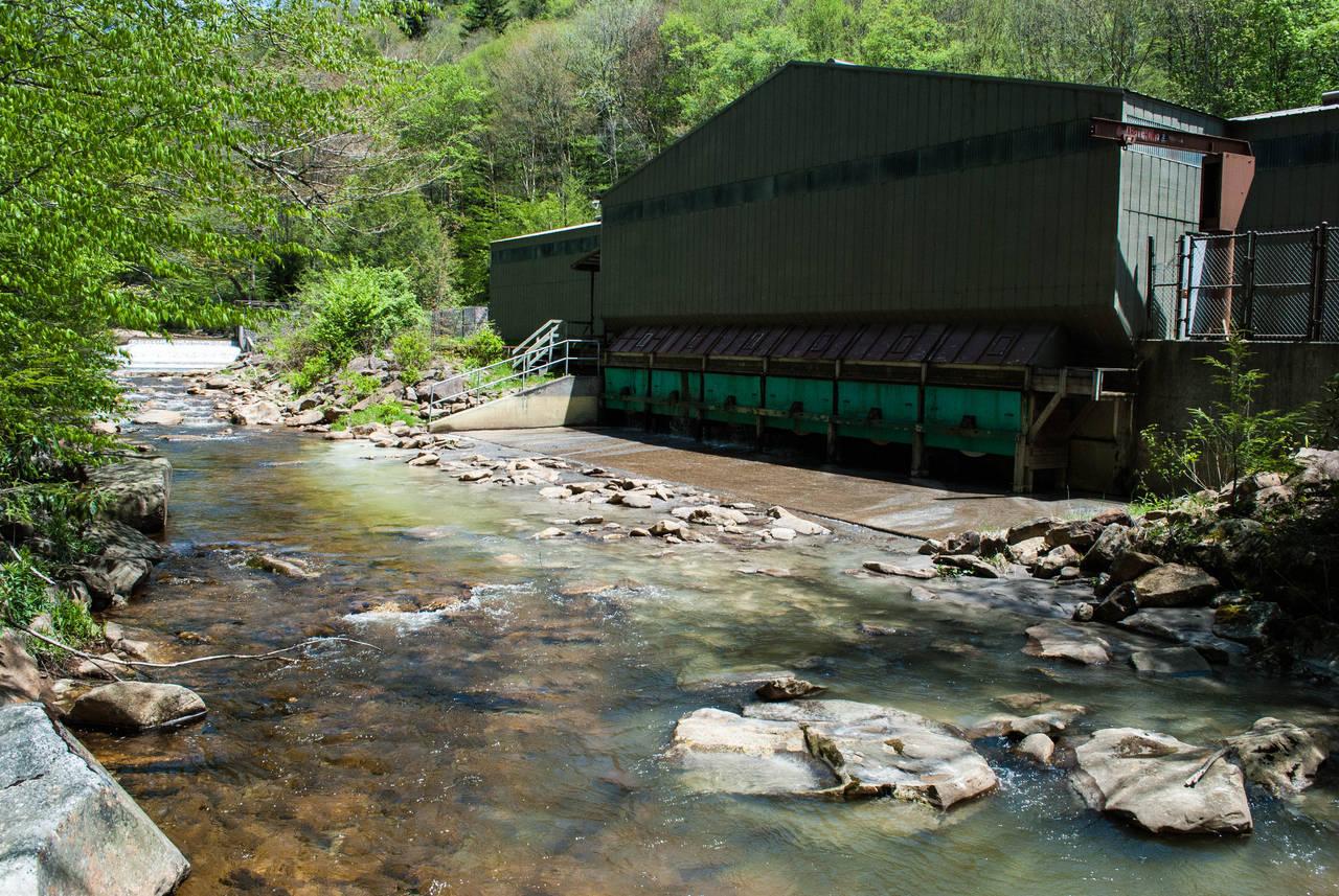 Cranberry National Wilderness - Cranberry River