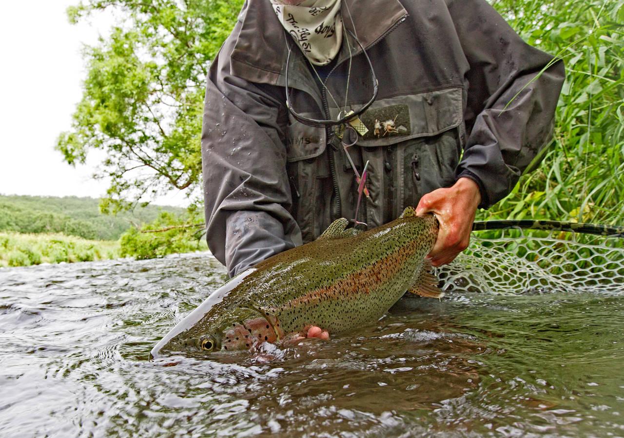 savan river rainbow trout - Kamchatka, Russia