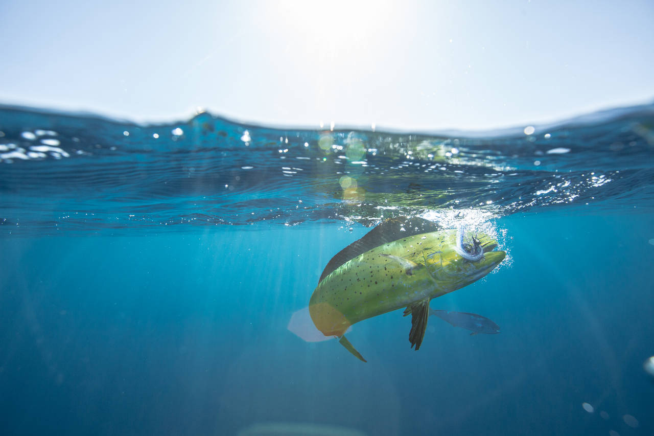 underwater fishing photography: tips for success | hatch magazine, Reel Combo