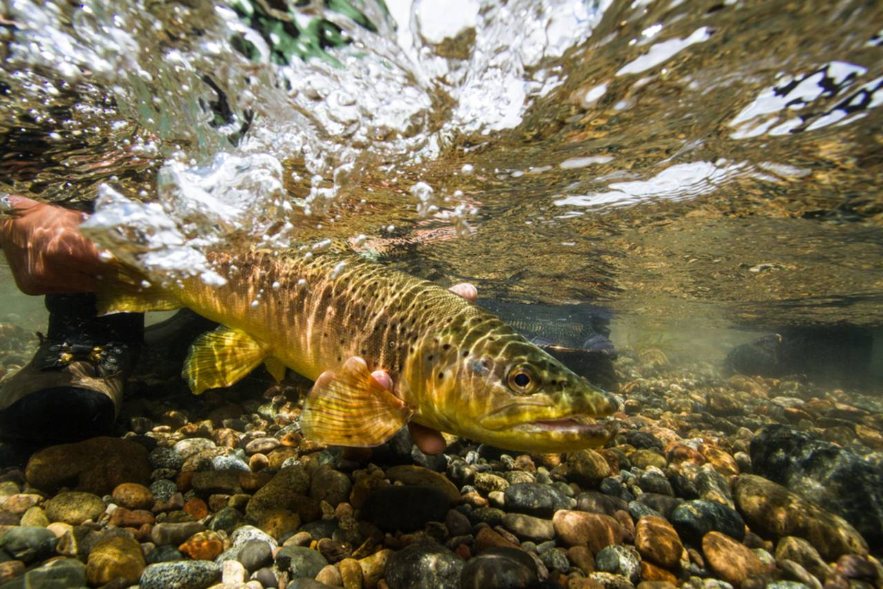 Underwater fishing photography the gear hatch magazine for Fly fishing photography