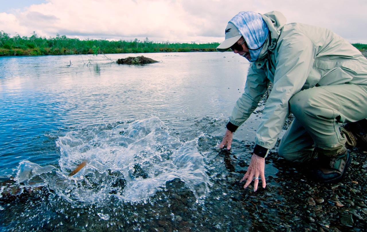 Kanektok Chum Salmon