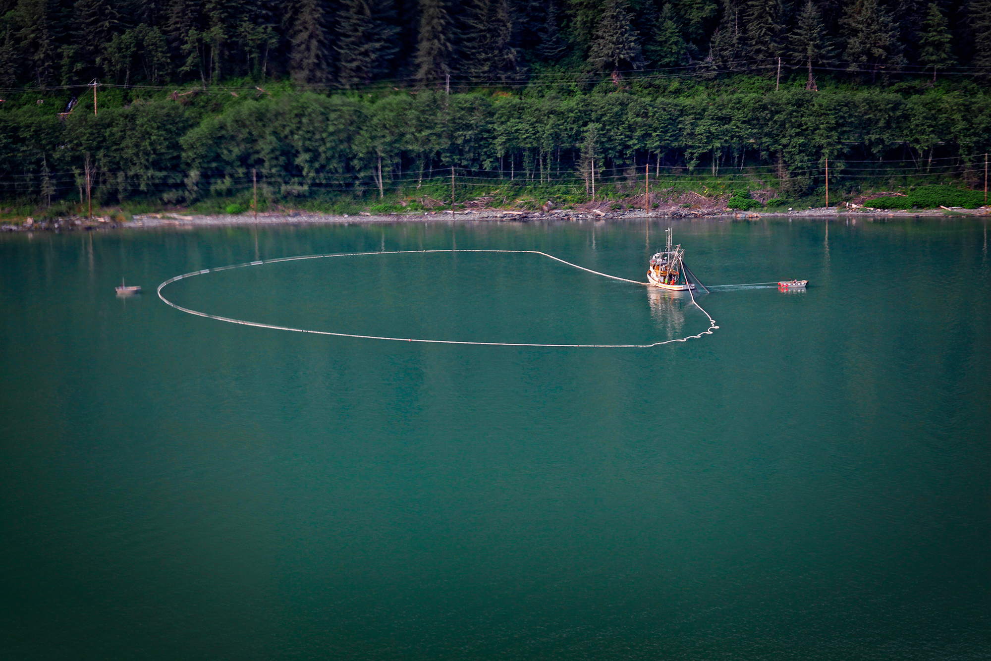 Here, a purse seining operation sets its nets in search of salmon. Purse seiners are responsible for large hauls of fish in Alaska's southeast, with catches from a single net set as high as a thousand fish or more (photo: Earl Harper).