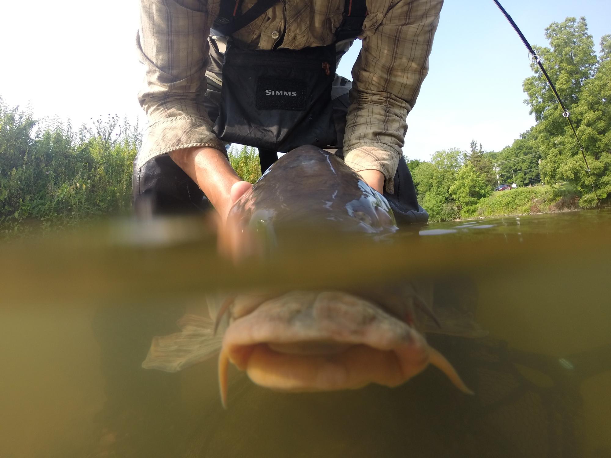 Runner up vacuum fish for Fly fishing split shot